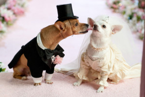 dog-wedding-2