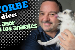 torbedice_animales