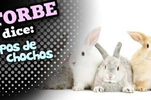 torbedice_chochos